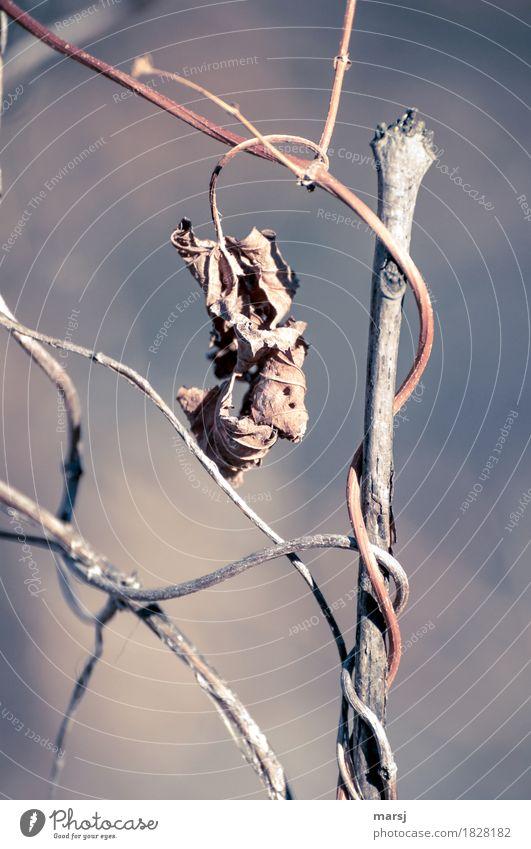 Herbstliches Abhängen Natur Pflanze Blatt Ast authentisch gruselig braun Traurigkeit Tod Müdigkeit Unlust Enttäuschung Einsamkeit Erschöpfung Senior Ende