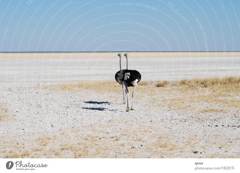 Zu zweit Gedeckte Farben Textfreiraum oben Schatten Starke Tiefenschärfe Tierporträt Rückansicht Ausflug Abenteuer Wärme Dürre Wüste Versalzung trocken Ebene