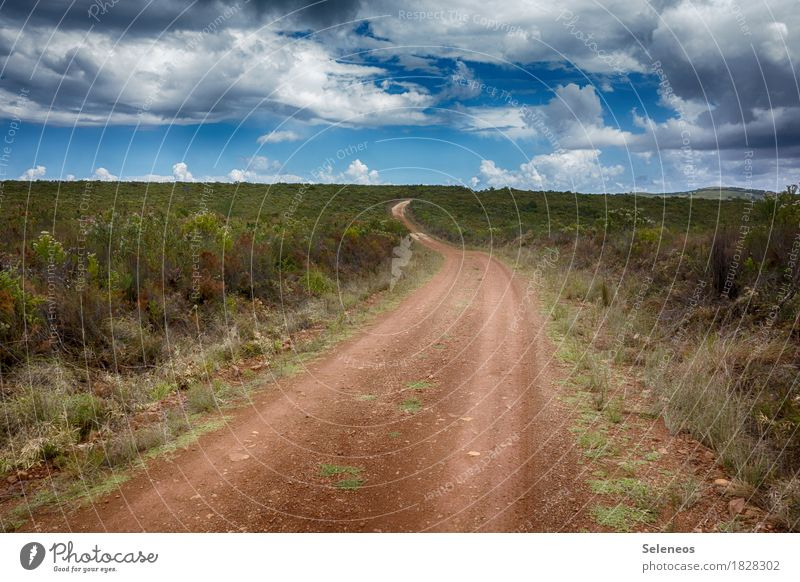 wandern Sinnesorgane Erholung ruhig Freizeit & Hobby Ausflug Abenteuer Ferne Freiheit Sommer Umwelt Natur Landschaft Himmel Wolken Horizont Sträucher natürlich