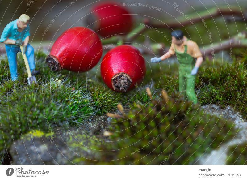 Miniwelten - Hagebutten Anpflanzung Mensch Mann Pflanze grün rot Erwachsene Garten maskulin Grünpflanze