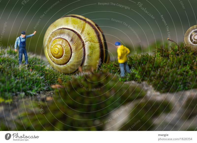 Miniaturwelten - Hausbau Mensch maskulin Mann Erwachsene 2 Tier Wildtier Schnecke gelb grün Schneckenhaus Arbeiter Handwerker bauen Querformat Spirale Moos