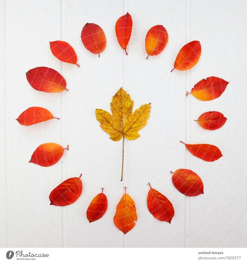 AK# Der Herbst und seine Blätter VI Kunst Kunstwerk ästhetisch Blatt herbstlich Herbstlaub Herbstfärbung Herbstbeginn Herbstwald Herbstwetter Herbstwind