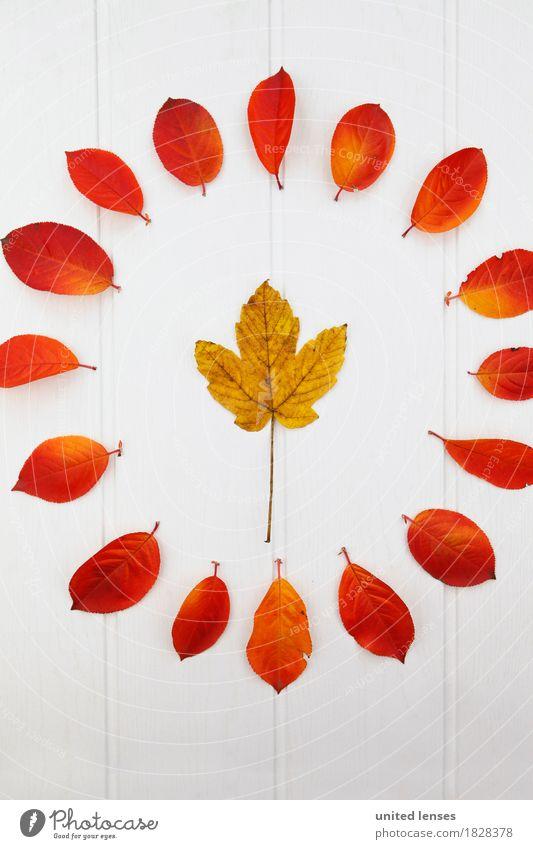 AK# Der Herbst und seine Blätter V Natur Blatt Kunst ästhetisch Kreis Herbstlaub herbstlich Kunstwerk Symmetrie Ahornblatt Herbstfärbung Herbstbeginn Herbstwald