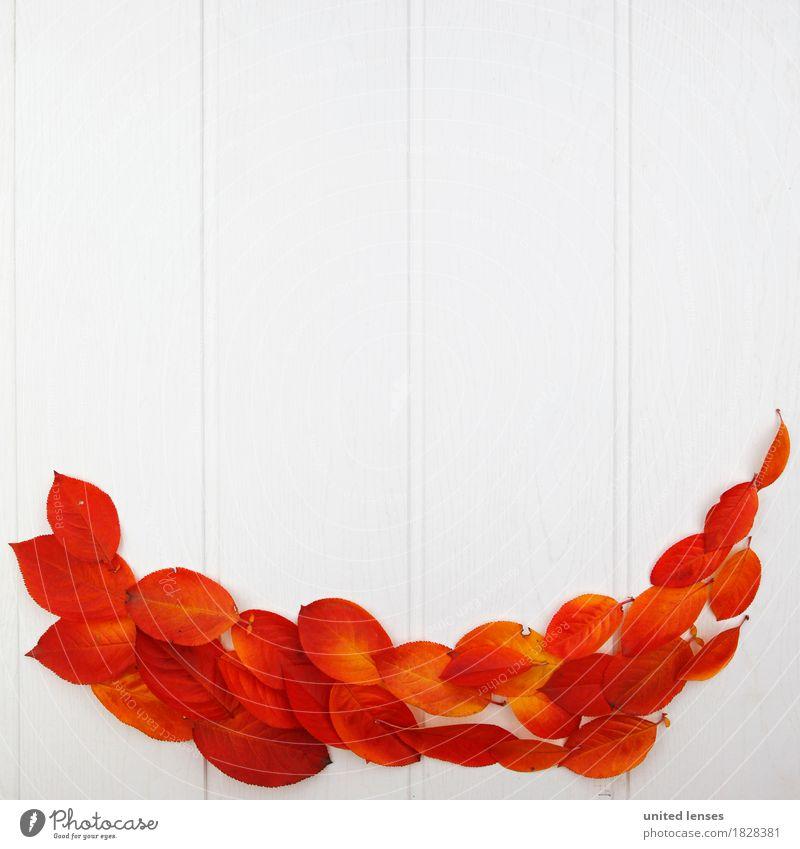 AK# Der Herbst und seine Blätter IV Kunst Kunstwerk ästhetisch Symmetrie herbstlich Herbstlaub Herbstfärbung Herbstbeginn Herbstwald Herbstwetter Herbstwind rot