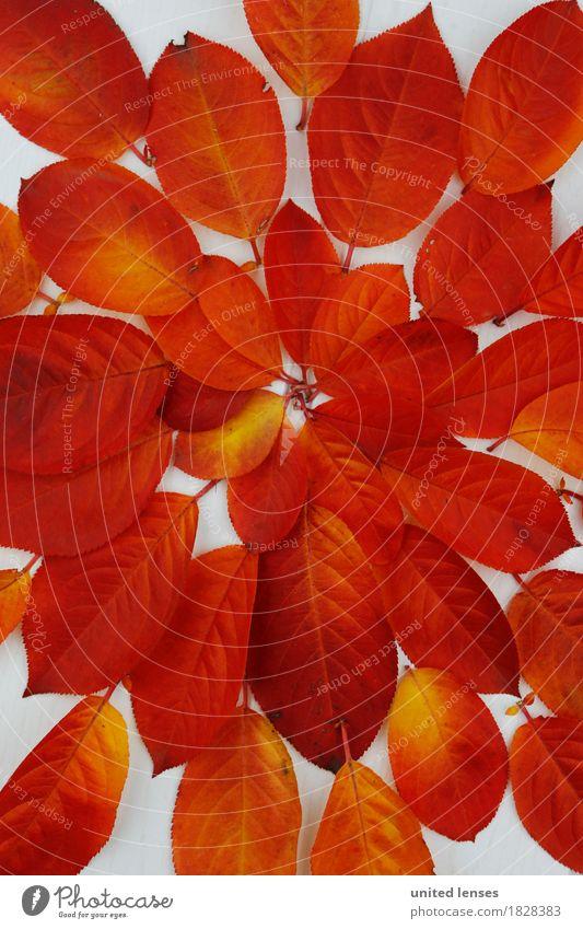 AK# Der Herbst und seine Blätter III Kunst Kunstwerk ästhetisch Symmetrie rot orange Farbe Farbenspiel Farbenwelt Farbverlauf Blatt Laubbaum herbstlich