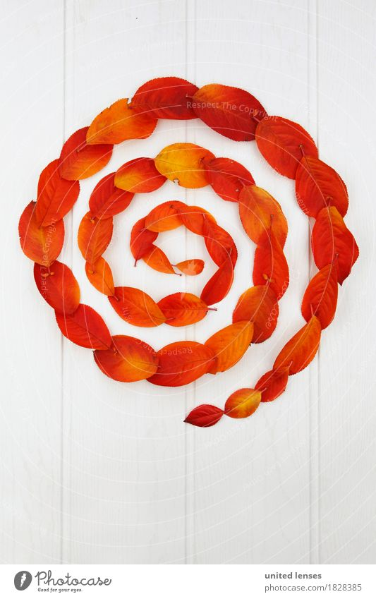 AK# Der Herbst und seine Blätter II Kunst Kunstwerk ästhetisch Kreis kreisrund Kreisbewegung Spirale rot orange weiß Symmetrie graphisch Wasserwirbel herbstlich