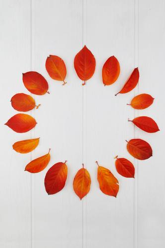 AK# Der Herbst und seine Blätter I Kunst Kunstwerk Symmetrie Jahreszeiten herbstlich Herbstlaub Herbstfärbung Herbstbeginn Blatt Design gestalten rot viele 16