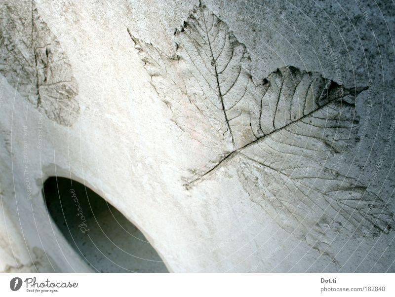 Herbstloch Pflanze Blatt Wand grau Mauer Beton Fassade Dekoration & Verzierung Zeichen Bauwerk Loch Blattadern Ahorn Symbole & Metaphern Abdruck Linde