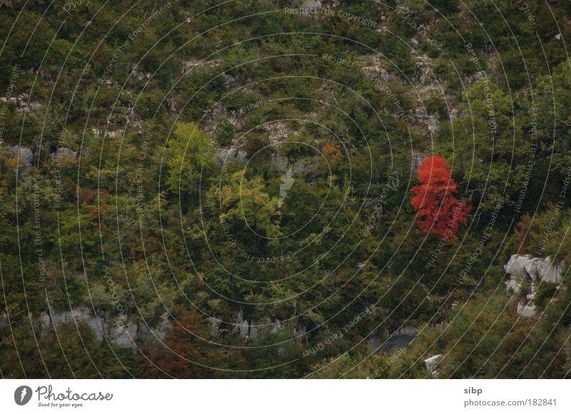 Einzelgänger Natur grün Baum rot Einsamkeit Umwelt Landschaft Herbst Berge u. Gebirge Felsen Vergänglichkeit