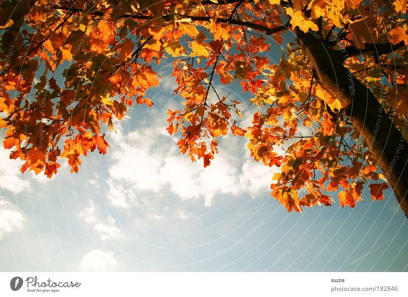 Buntpapier Natur alt Himmel Baum Pflanze Blatt Wolken Herbst Umwelt gold Zeit ästhetisch Jahreszeiten Baumstamm Schönes Wetter Baumkrone