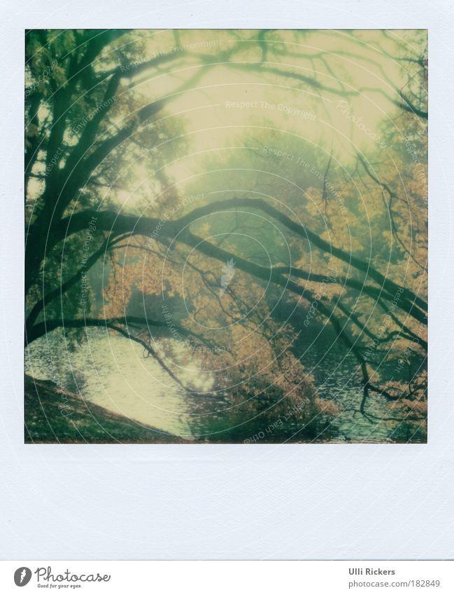 . Natur Wasser schön Baum ruhig Einsamkeit Ferne Erholung Herbst Gras Glück träumen Park Zufriedenheit frei Polaroid