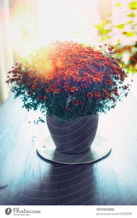Herbsliche Blumen in der Vase auf dem Tisch Natur Pflanze Sonne Blatt Fenster Blüte Innenarchitektur Liebe Herbst Lifestyle Stil Design Wohnung Raum