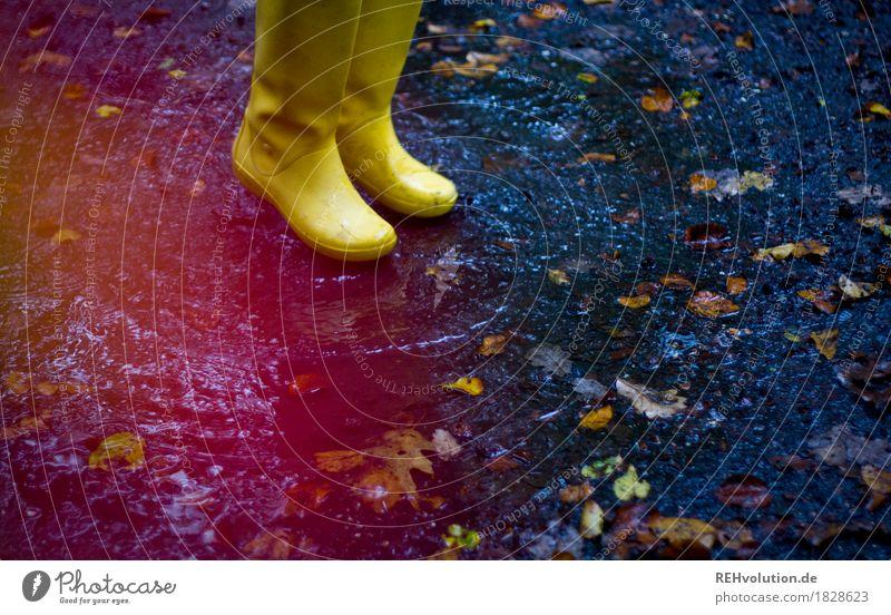 Gelbe Gummistiefel Fuß 1 Mensch Umwelt Natur Herbst Wetter schlechtes Wetter Regen Blatt springen authentisch frei Freundlichkeit Fröhlichkeit nass Freude Glück