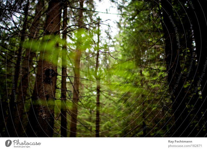 in the woods Himmel Natur grün Baum Pflanze Sommer Wald Umwelt authentisch Schönes Wetter
