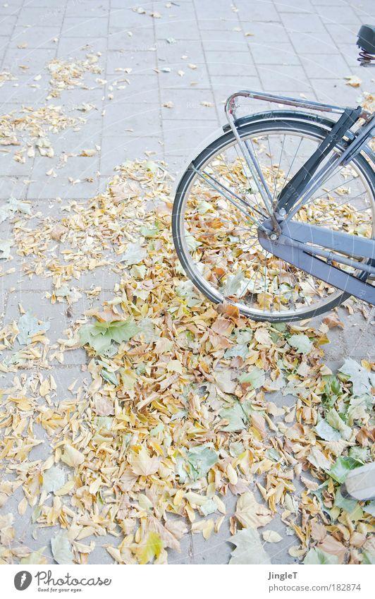 gegen die Schwerkraft Ferien & Urlaub & Reisen Umwelt Straße Herbst natürlich Zufriedenheit Ausflug Europa Schönes Wetter Verkehrswege selbstbewußt Niederlande Verkehrsmittel Amsterdam