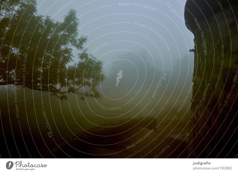 Morgens Natur Baum Einsamkeit dunkel Wiese Traurigkeit Stimmung Nebel Wetter Umwelt gruselig Ruine