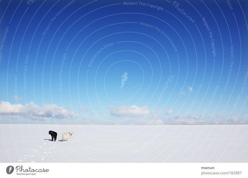 """""""Polarfüchse"""" Natur Himmel weiß blau Winter ruhig Einsamkeit Ferne Schnee Erholung Hund Landschaft Freundschaft Eis Zusammensein wandern"""