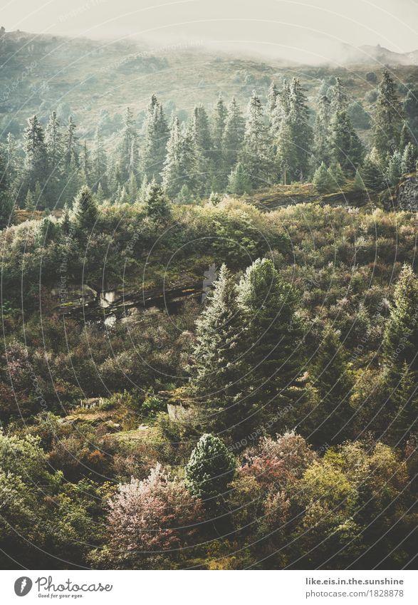 Wunderbarer Herbst. Umwelt Natur Wolken Klima Wetter Eis Frost Pflanze Baum Gras Sträucher Moos Wald Hügel Felsen Alpen Berge u. Gebirge kalt Berghang Schweiz