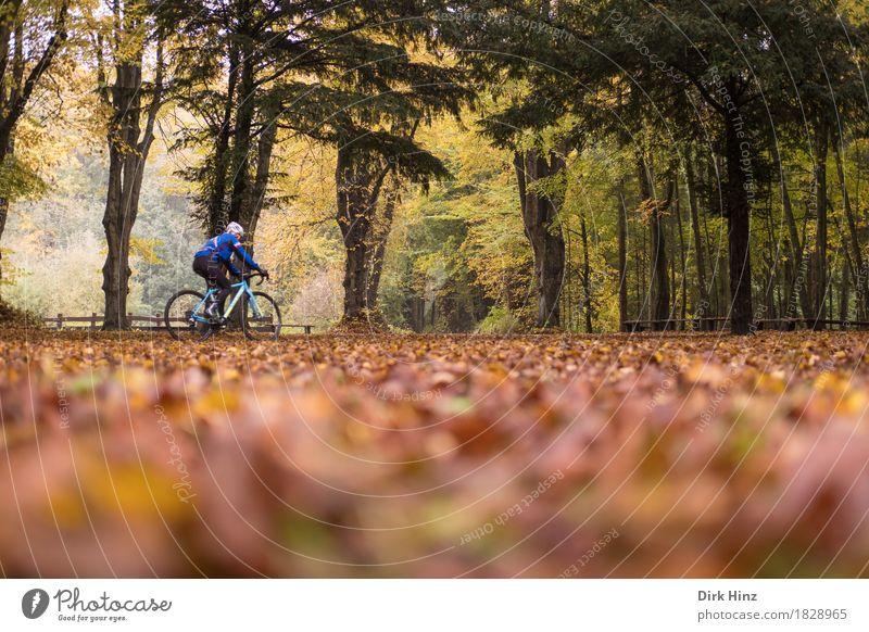 Herbst-Tour Gesundheitswesen sportlich Leben Freizeit & Hobby Ferien & Urlaub & Reisen Tourismus Ausflug Freiheit Fahrradtour 1 Mensch Leidenschaft Leistung