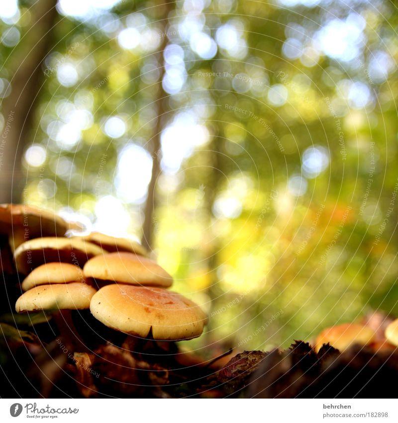 trostpflaster Farbfoto Außenaufnahme Menschenleer Reflexion & Spiegelung Froschperspektive Natur Schönes Wetter Pflanze Baum Gras Sträucher Moos Pilz Wald
