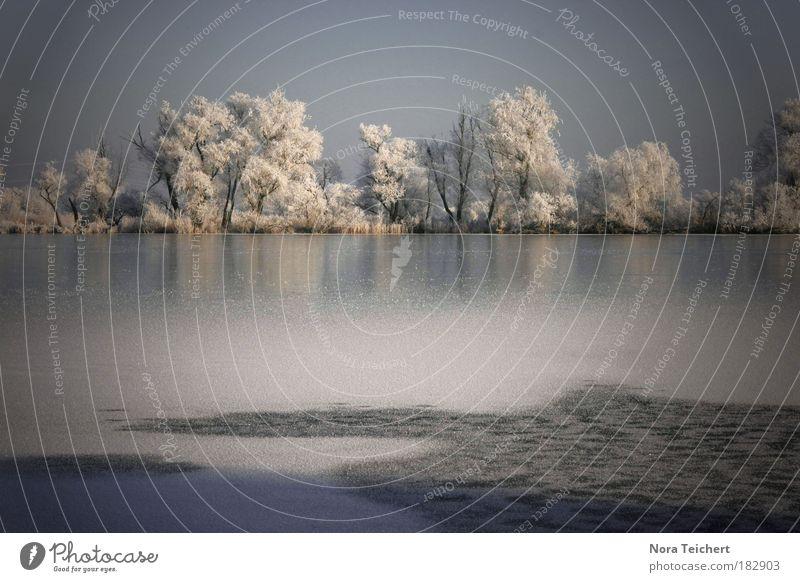 Wintergruß Natur Wasser schön weiß Baum blau Pflanze Einsamkeit Ferne Wald kalt träumen Traurigkeit See Landschaft