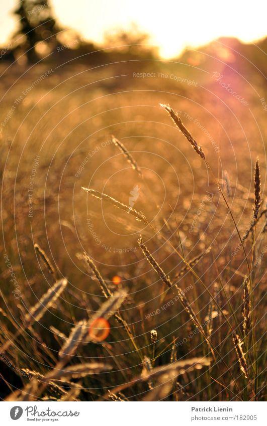 evening setting Ausflug Ferne Sommer Natur Landschaft Pflanze Sonnenaufgang Sonnenuntergang Gras Wüste outback Australien New South Wales Farbfoto Außenaufnahme