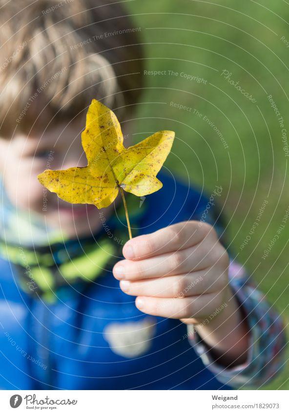 Goldschatz Kindererziehung Kindergarten Mensch Junge Hand 3-8 Jahre Kindheit festhalten Herbst Blatt gelb Natur Familie & Verwandtschaft Farbfoto Außenaufnahme