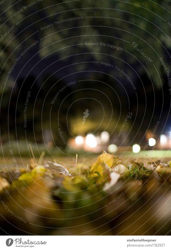 Fall Framing Natur blau grün Pflanze Blatt Einsamkeit ruhig gelb Erholung Herbst Wiese Umwelt Traurigkeit Stimmung Park Angst