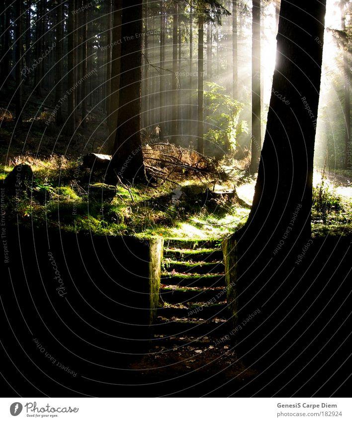 Treppe im Wald Farbfoto Außenaufnahme Textfreiraum unten Schatten Kontrast Lichterscheinung Sonnenlicht Sonnenstrahlen Gegenlicht Natur Landschaft Pflanze Baum