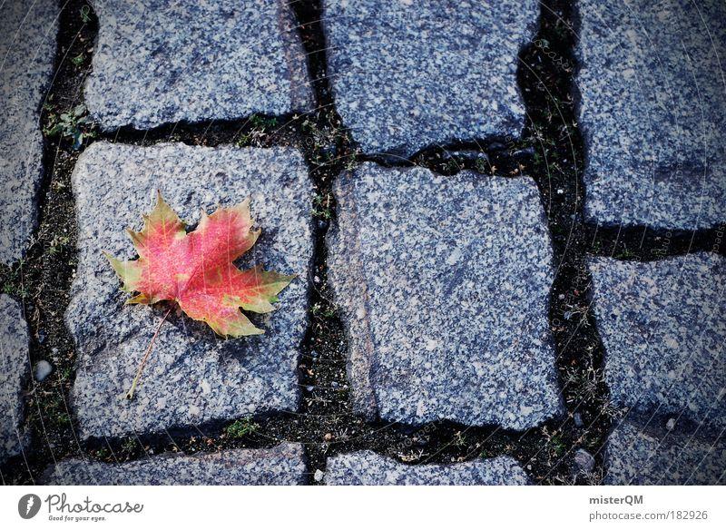 die Herbst die. Mensch Natur rot Blatt Einsamkeit Winter ruhig Straße Leben Zufriedenheit ästhetisch Boden Ende Jahreszeiten Kopfsteinpflaster