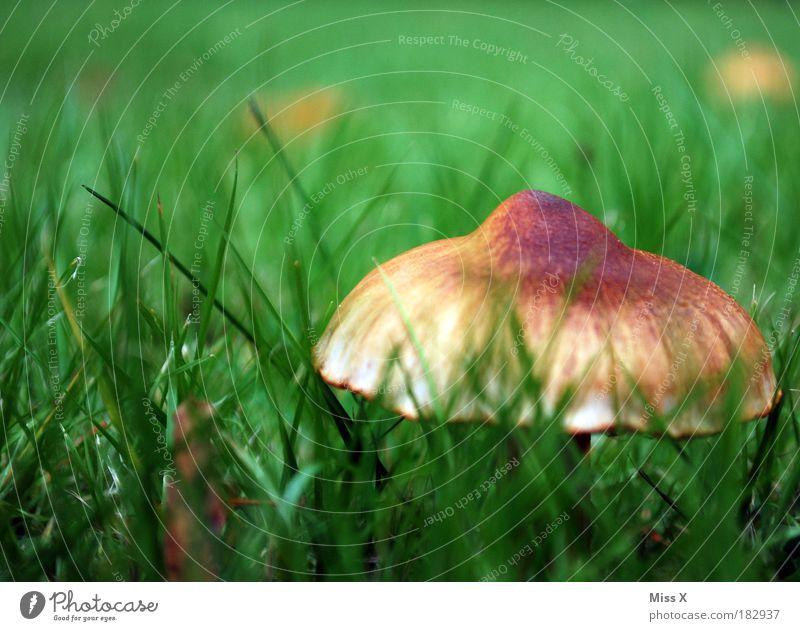 Hamma Schwamma Natur Pflanze Sommer Blatt Umwelt Wiese kalt Lebensmittel Herbst Gras Park Freizeit & Hobby Wachstum frisch Suche Schönes Wetter