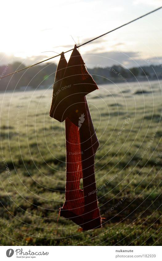 Novemberkind Natur alt grün rot ruhig Einsamkeit kalt Herbst Wiese Gras träumen Traurigkeit Landschaft Stimmung braun Feld