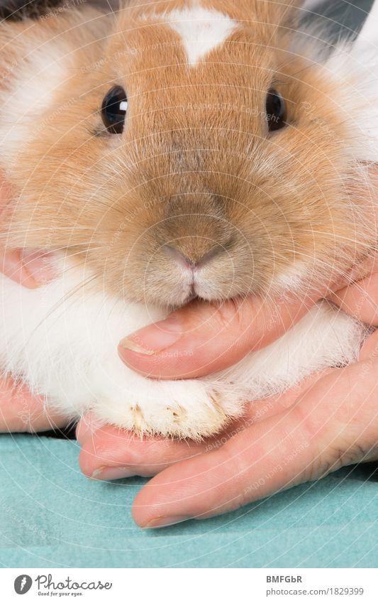 Maniküre fürs Häschen Tier Gesundheit Freizeit & Hobby Körperhaltung Wohlgefühl Krankheit Fell Körperpflege Haustier Fürsorge Tiergesicht Hase & Kaninchen Pfote Krallen Vorsorge züchten