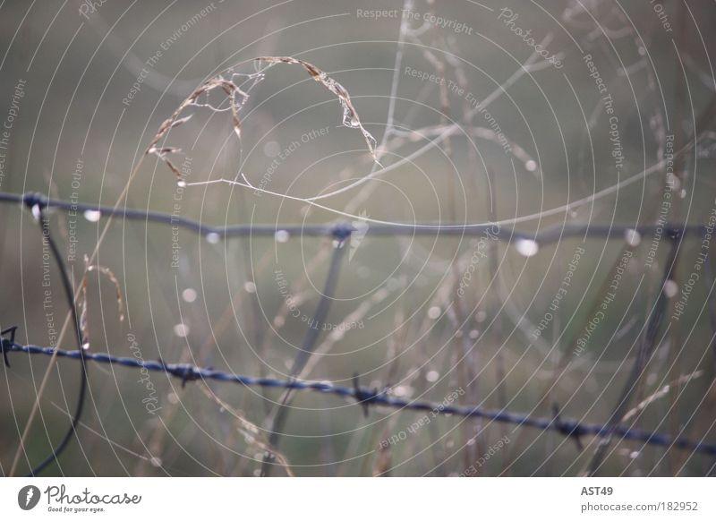Trauerweizen Natur Pflanze Einsamkeit kalt Wiese Herbst Gefühle Gras grau Traurigkeit Landschaft Stimmung Feld Nebel Umwelt Wassertropfen