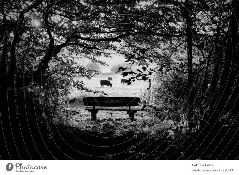 hinsetzen wandern Natur Horizont Sonne Herbst Schönes Wetter Wiese Feld Wald Hügel Kuh Tiergruppe Herde Parkbank sitzen Erholung Pause Kuhherde Holzbank Bank