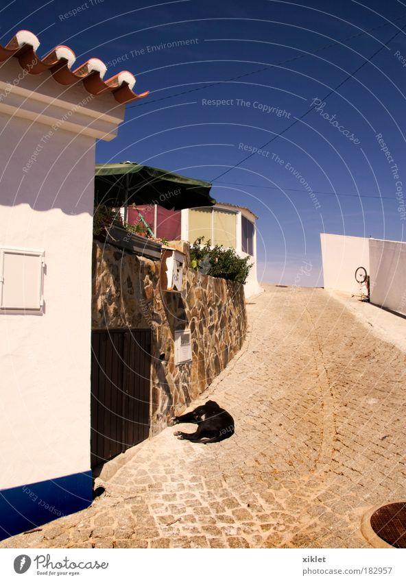 blau schön Hund Sommer Tier ruhig Haus Straße Umwelt Gebäude Dorf Gelassenheit Schönes Wetter Gasse Blauer Himmel Wolkenloser Himmel