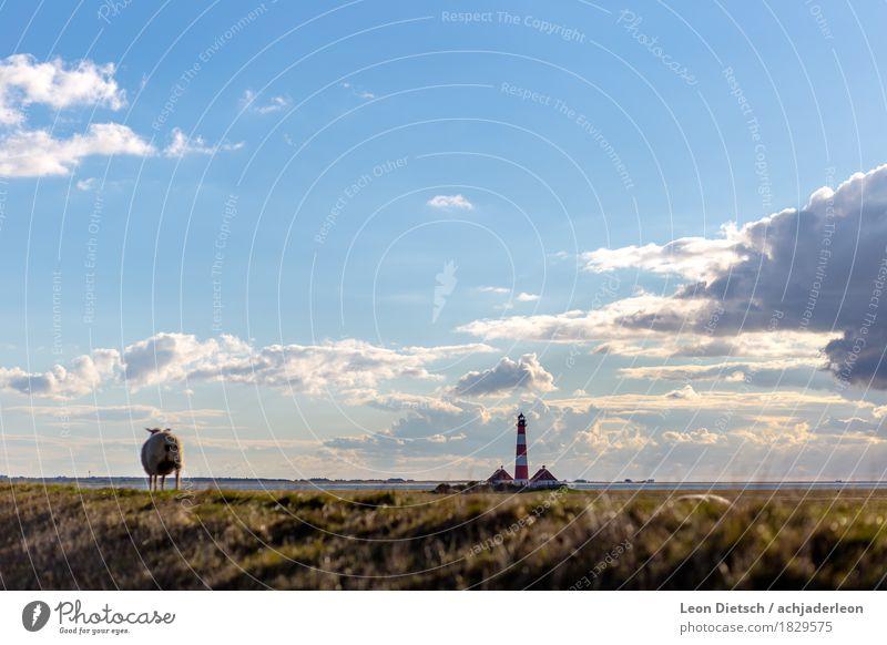 """""""Ob ich wohl auch auf den Leuchturm darf?"""" ... Landschaft Himmel Wolken Sonnenlicht Frühling Schönes Wetter Gras Sträucher Hügel Küste Nordsee Turm Leuchtturm"""