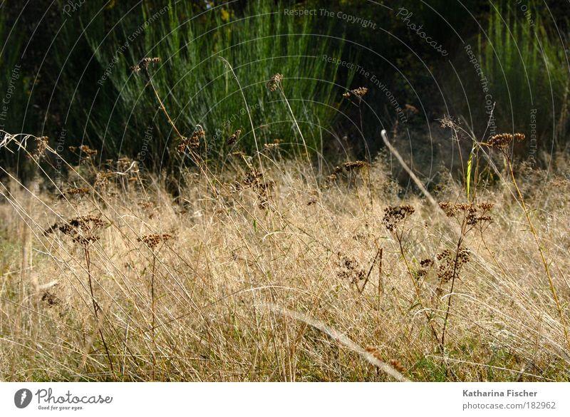 Wildwuchs Natur grün Pflanze Landschaft Wiese Herbst Gras braun Feld Sträucher Heu Wildpflanze