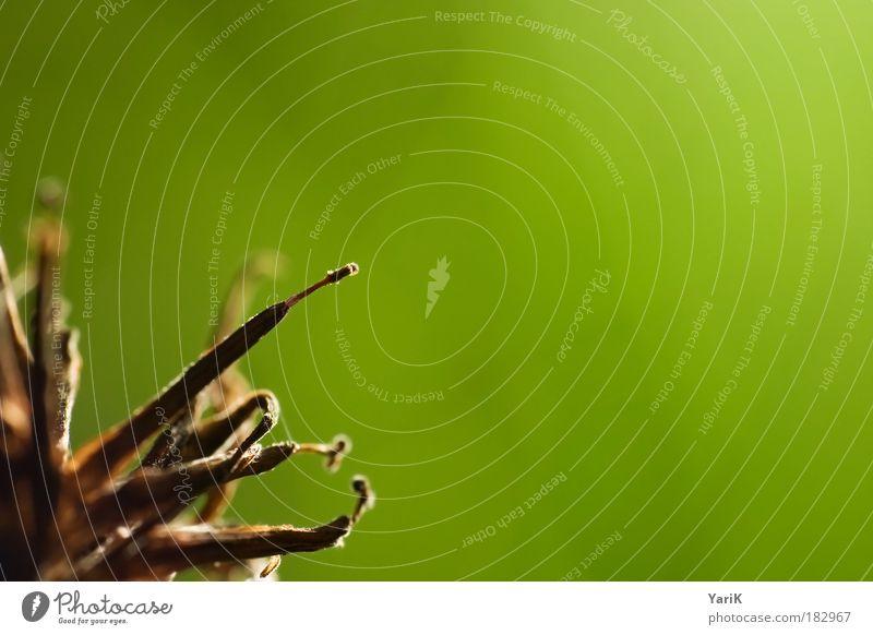 lichtfühler Natur Blume grün Pflanze ruhig Einsamkeit Herbst Gras klein Hoffnung Sträucher nah Vergänglichkeit Gelassenheit Mut Verfall