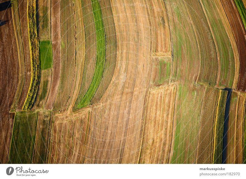 herbst-erd-farben Menschenleer Umwelt Natur Landschaft Pflanze Urelemente Erde Luft Herbst Klima Wetter Schönes Wetter Gras Sträucher Moos Grünpflanze
