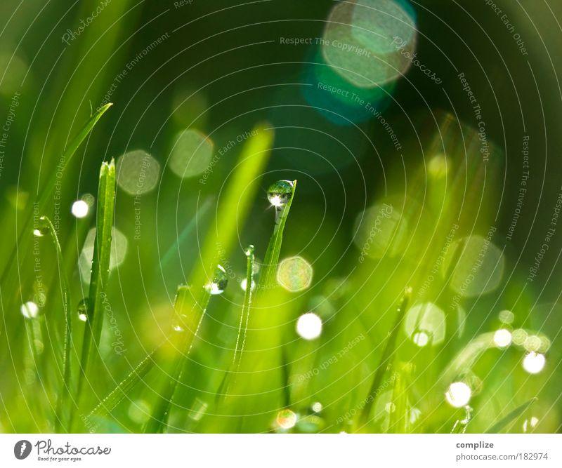 Tauperle Farbfoto Außenaufnahme Makroaufnahme Morgen Reflexion & Spiegelung Sonnenstrahlen Froschperspektive harmonisch Wohlgefühl Erholung Wassertropfen