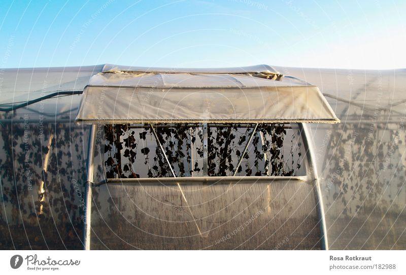 almeria Natur blau alt weiß Pflanze kalt Umwelt Herbst Feld Erde Klima Wachstum Vergänglichkeit Wandel & Veränderung Schutz Appetit & Hunger