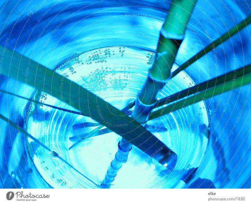 bambusblaugrün Wasser grün blau Pflanze Glas Bambusrohr Holz