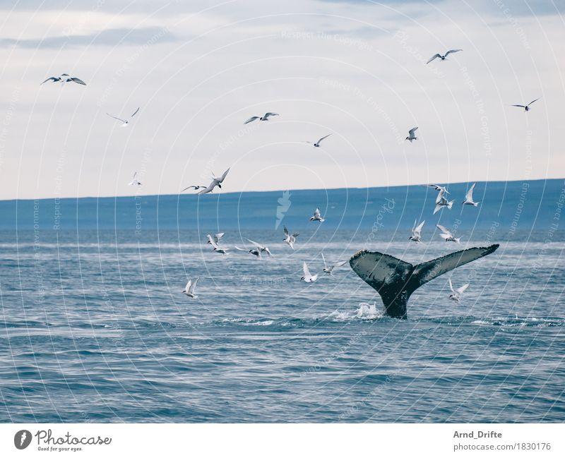 Fluke Himmel Natur blau Wasser Meer Landschaft Tier Ferne Küste Freiheit Schwimmen & Baden fliegen Wellen Ausflug Wildtier Tiergruppe