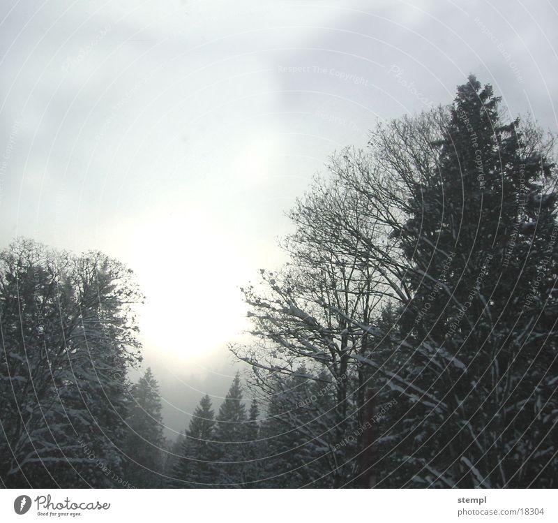 Tannheimer Winternebel Baum Wald Nebel
