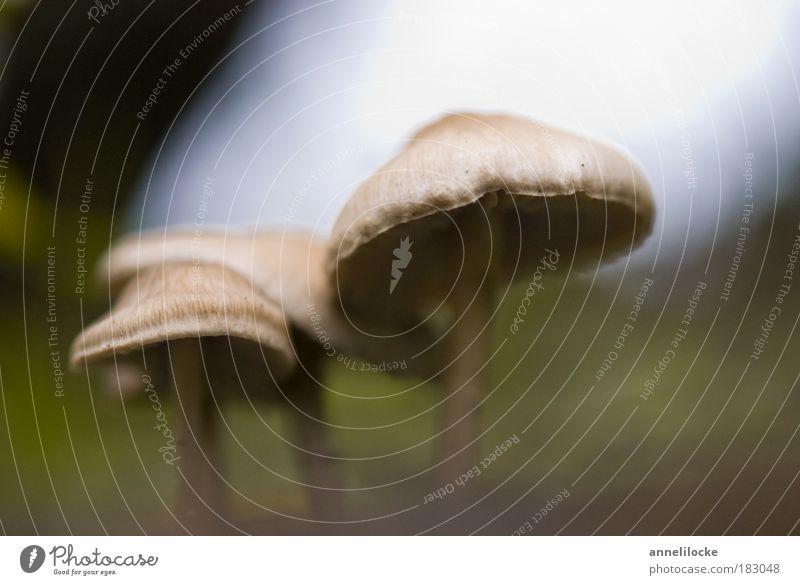 Unterschlupf Außenaufnahme Makroaufnahme Hintergrund neutral Tag Silhouette Froschperspektive Lebensmittel Pilz Ernährung Bioprodukte Ausflug Umwelt Natur