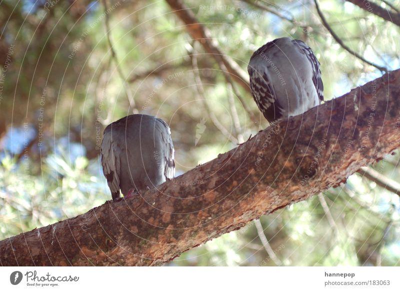 kopflos Natur Baum Tier Müdigkeit Geborgenheit Taube