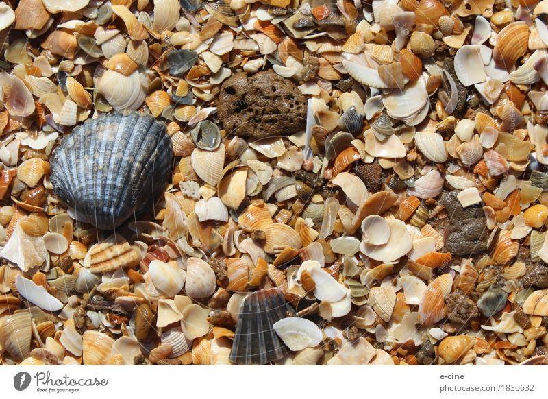 Muschelstrand Natur Ferien & Urlaub & Reisen Sommer Wasser Sonne Meer Erholung Ferne Strand gelb Küste Schwimmen & Baden braun Sand Ausflug gold