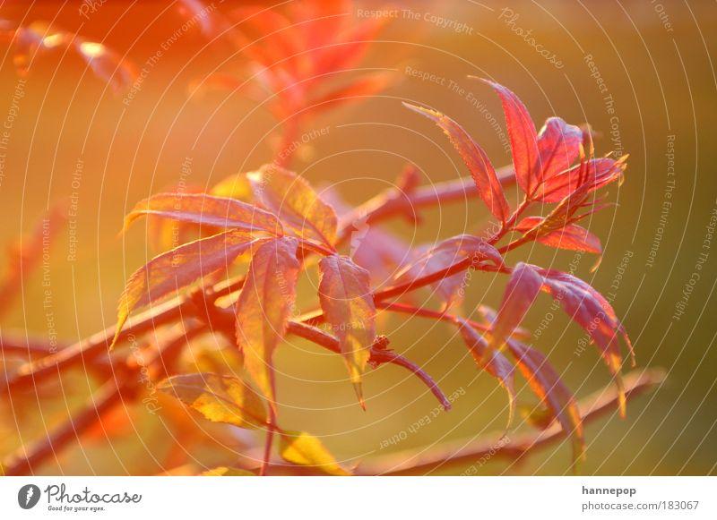rotlicht Natur Baum Pflanze Blatt Idylle atmen