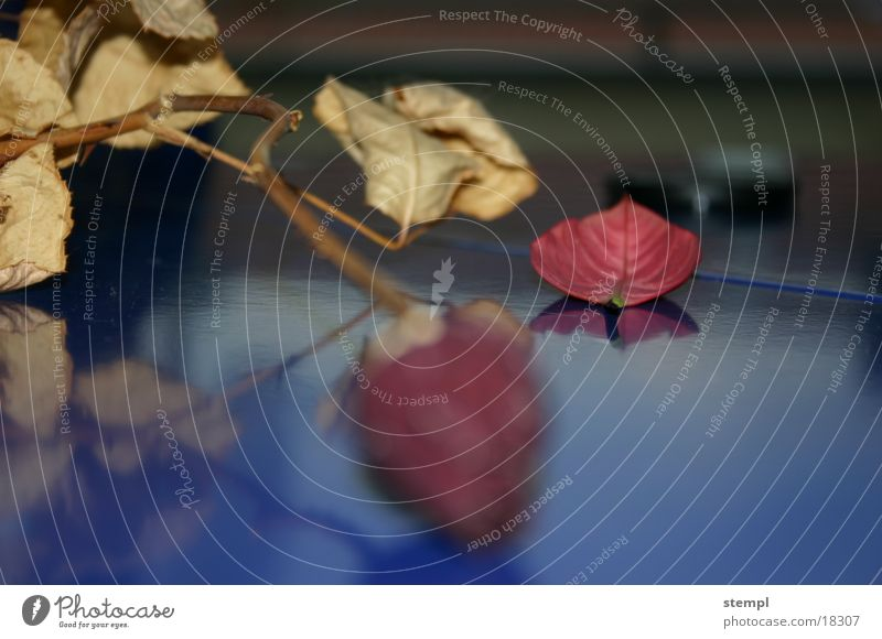 Rose Style Blatt getrocknet nah Ferne Fototechnik Detailaufnahme alt unschaft